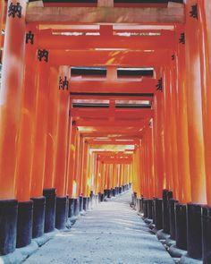 #kyoto #temple #inari #inaritaisha #shrine #japan #gates #samurai #ninja #manga #japanese #lifegourmets #travel #traveling #TFLers #vacation #visiting #instatravel #instago #instagood #trip #holiday #photooftheday #fun #travelling #tourism #tourist #instapassport