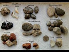 When you think of Lake Michigan, does fossil hunting come to mind? Many people may not be aware that the beaches of Lake Michigan can be a hot spot for fossils hunters. Aside from fossils, Lake Michigan beaches are also home to many fascinating rocks. Michigan Vacations, Michigan Travel, Beach Rocks, Beach Stones, Tahiti Tattoo, Ladybug E Catnoir, Rock Identification, Rock Tumbling, Rock Hunting