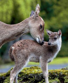 Superb Nature, beautiful-wildlife:   LovebyGeorge Barker