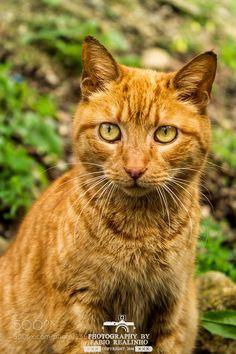 Feline by FabioRealinhoPhotography #animals #animal #pet #pets #animales #animallovers #photooftheday #amazing #picoftheday