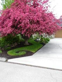 oh.... oh my gosh.... look at this crab apple tree and the landscaping!