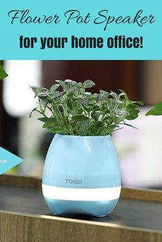 Bluetooth Flower Pot Smart Speaker - Touch Plant to Play Music and Turn on Light Music Flower, Signal To Noise Ratio, Flower Pots, Flowers, Light Music, Real Plants, Led Night Light, Plant Holders, Light Colors
