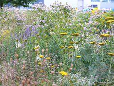 Ecologische bedrijfstuin op industrieterrein- Ecological company garden on…