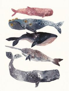 Five Whales Stacked - Large Archival Print