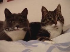 Talking Cats❤️ (Click to view video)
