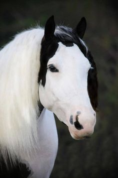Magnificent Horse, Beautiful Markings.......
