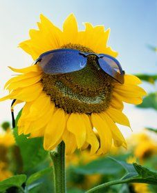 hahaha made me laugh such a happy sunflower I Laughed, Places, Peace Signs, Sunflowers, Fun Things, 1, Thoughts, Happy, Summer