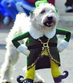 Elf costume for dogs
