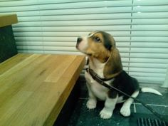 Je peux monter???