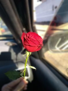 Rain Wallpapers, Phone Wallpaper Images, Flower Phone Wallpaper, Rose Wallpaper, Love Rose Flower, Love Flowers, Cute Couple Selfies, Beautiful Love Pictures, Shotting Photo