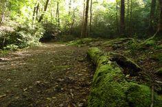 Big Creek Hiking Trails