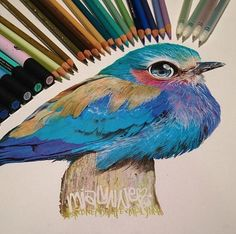 Exceptional coloured pencil drawings by Karla Mialynne.