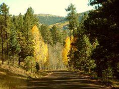 white mountain apache arizona | Fall colors in Arizonas White Mountains, on the Ft. Apache ...