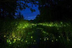 500 LEDs Resemble Glowing Fireflies at Night - My Modern Metropolis
