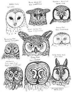 A sweet fuck-ton of owl references. Before anyone asks, yes, that skeleton at the top belongs to an owl. It's not a chicken, it's not a hawk, it's an owl. Owls are all puff and no bone. Animal Drawings, Art Drawings, Drawing Owls, Owl Pictures, Owl Always Love You, Owl Crafts, Wise Owl, Owl Bird, My Spirit Animal