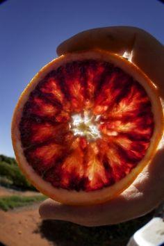 Blood Orange   http://www.redbellycitrus.com.au/about/about-blood-oranges