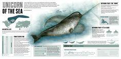 Resultado de imagen de infografía biologia marina