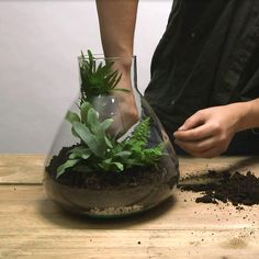 DIY: planten terrarium - Intratuin Potted Plants, Diys, Projects To Try, Flowers, Miniature, Bullet Journal, Urban, Design, Lawn And Garden