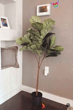My cute artificial fig leaf tree and options for you to get your own!  <br> Fig Leaf Tree, Fig Leaves, Plant Leaves, You Got This, How To Get, Cute, Plants, Home Decor, Homemade Home Decor