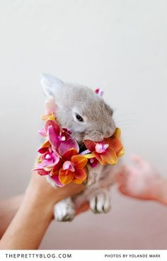 Flower (and bunny) Power!