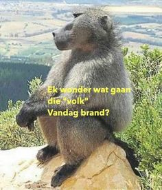 Captured with Lightshot Cute Quotes, Best Quotes, Funny Sayings, Funny Facts, Funny Jokes, Lion Face Drawing, Afrikaanse Quotes, First Language, Funny Bunnies