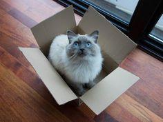Почему кошки обожают коробки: мнение ученых