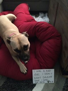 Dog Shame | I was a bad girl. I didn't want dinner since I ate...