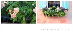 Spring in Charleston #Charlestonly