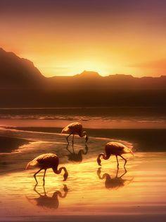 Flamingo Sunrise | Photo by Jenny Woodward £