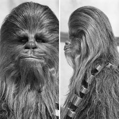 Chewie's reference photos from A New Hope look more like his Imperial arrest photos. Have YOU seen this Wookiee?