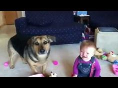 baby laughing dog eating bubbles