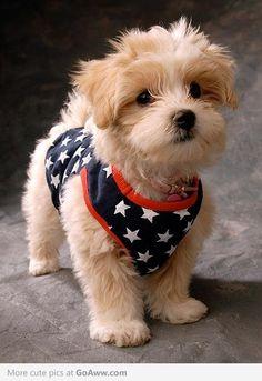 Star Puppie.  I want it!