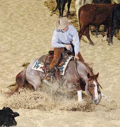 Le Quarter Horse - Un Quarter Horse pendant une épreuve de cutting