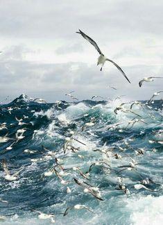 Scuttle & Company Out At Sea. #bythesea, #beachlife @prettysocialgal.
