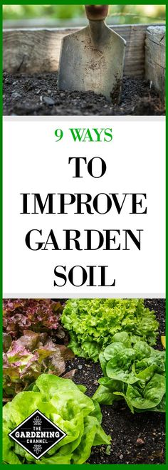 Organic Vegetable Gardening Learn the importance of soil quality in your vegetable garden and 9 ways you can improve the quality of your gardening soil. Vegetable Garden Planner, Backyard Vegetable Gardens, Tomato Garden, Garden Soil, Garden Care, Organic Vegetables, Growing Vegetables, Organic Fruit, Dubai Garden