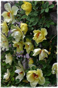 Suvikumpu Garden, Plants, Flowers, Garten, Gardens, Planters, Tuin, Plant, Planting