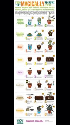 Food That Magically Regrow Itself.