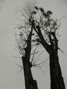 Sillhouette Tree