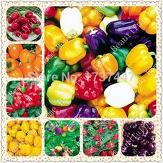 >> Click to Buy << Free Shipping 400pcs 8 kind strange multicolored bell pepper chili pepper seeds family Exotic flower garden decoration #Affiliate