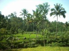 Batang Kabupaten Tercinta: September 2011