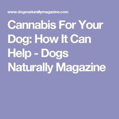 Cannabis For Your Dog: How It Can Help - Dogs Naturally Magazine