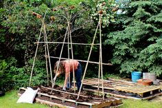 Suburban Gardening - Pallets, Fruit Trees, Sprouting Containers, and Sunflower Stalk Trellises