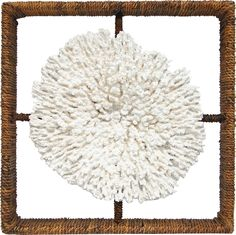 Shadow Box Plato Coral: Beach Decor, Coastal Decor, Nautical Decor, Tropical Decor, Luxury Beach Cottage Decor, Beach House Decor Shop