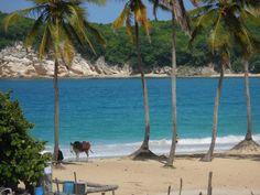 Macao Beach - Punta Cana