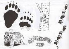 Risultati immagini per traccia orso