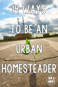 Great ideas for urban homesteading! Here are fourteen ways you can go green while living in the city. Fourteen ways to embrace the homesteading mentality of eco-friendliness, self-sufficiency, and slow living.: