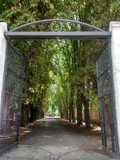 Arch, Outdoor Structures, Garden, Cities, Bonito, Longbow, Garten, Lawn And Garden, Gardens