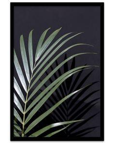 Poster med palme i lys og skygge - Supertrendy plakat!no Poster S, Plant Leaves, Palm, It Cast, Bathroom, Plants, Nature, Pictures, Bath Room