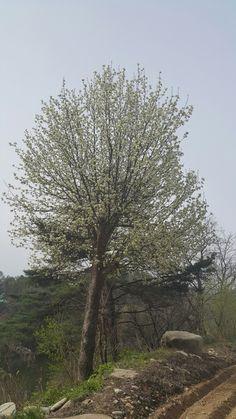 길가에 우뚝선 사과나무