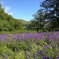 The Sugar Loaf in Abergavenny, as seen from Bluebell Shepherds Huts & PenLan Cottage